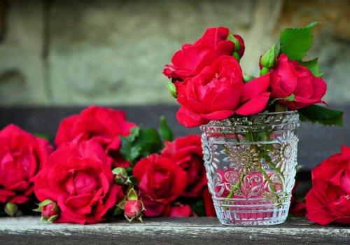 Roses dans la chambre